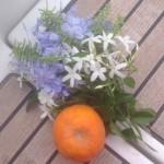 orange (Vanishing)