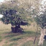 treebike1 (Last Post for 2015)