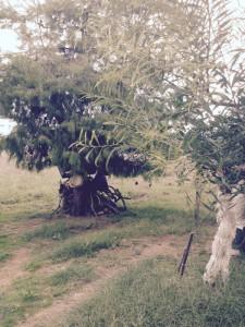 treebike1
