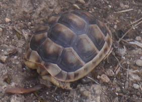 small-tortoise1