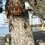 bird houses (Getting it right)